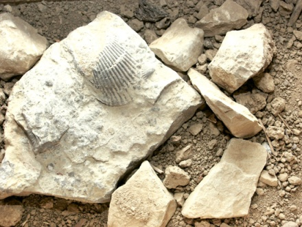 Fossils in the vineyard