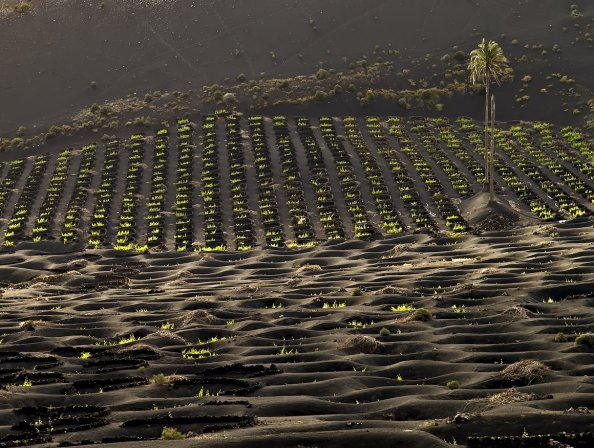 Vineyards at Los Bermejos