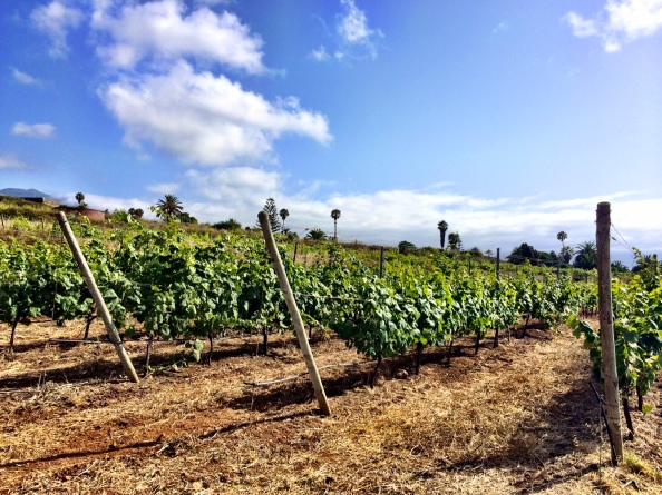 Biodynamic vineyards at Crater.